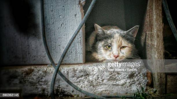 Close-Up Portrait Of Cat Resting Between Wooden Planks