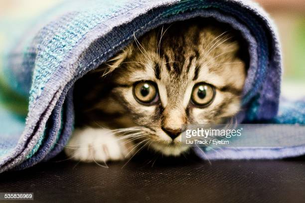 Close-Up Portrait Of Cat Under Blanket On Floor At Home