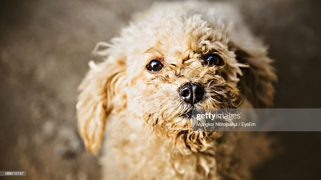 Close-up portrait of dog against blurred background : Stock Photo