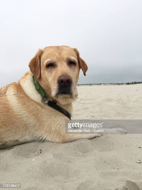 Close-Up Portrait Of Dog At Beach Against Sky
