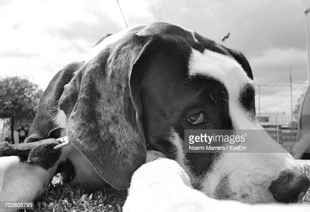 Close-Up Portrait Of Dog Resting On Field Against Sky