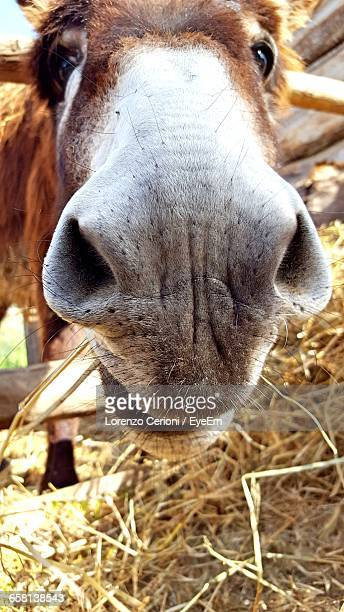 Close-Up Portrait Of Donkey