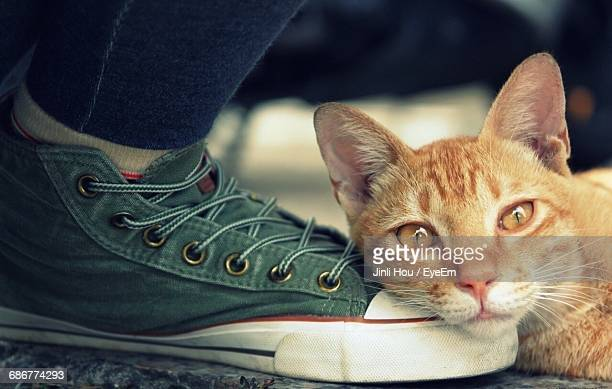 Close-Up Portrait Of Ginger Cat Sleeping On Person Foot