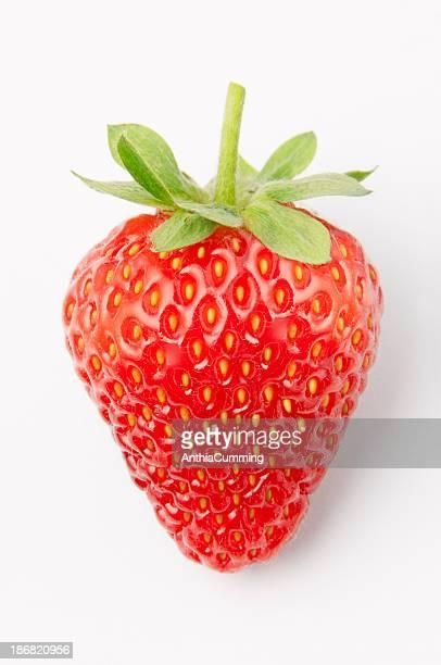 Eine frische Rote Erdbeere isoliert auf weißem Hintergrund