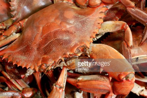 Closeup Shot Of Seafood Steamed Blue Crab Stock Photo ...