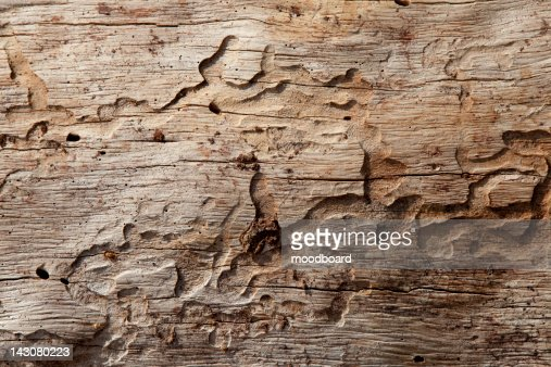Close-up shot of wood grain pattern : Stock-Foto
