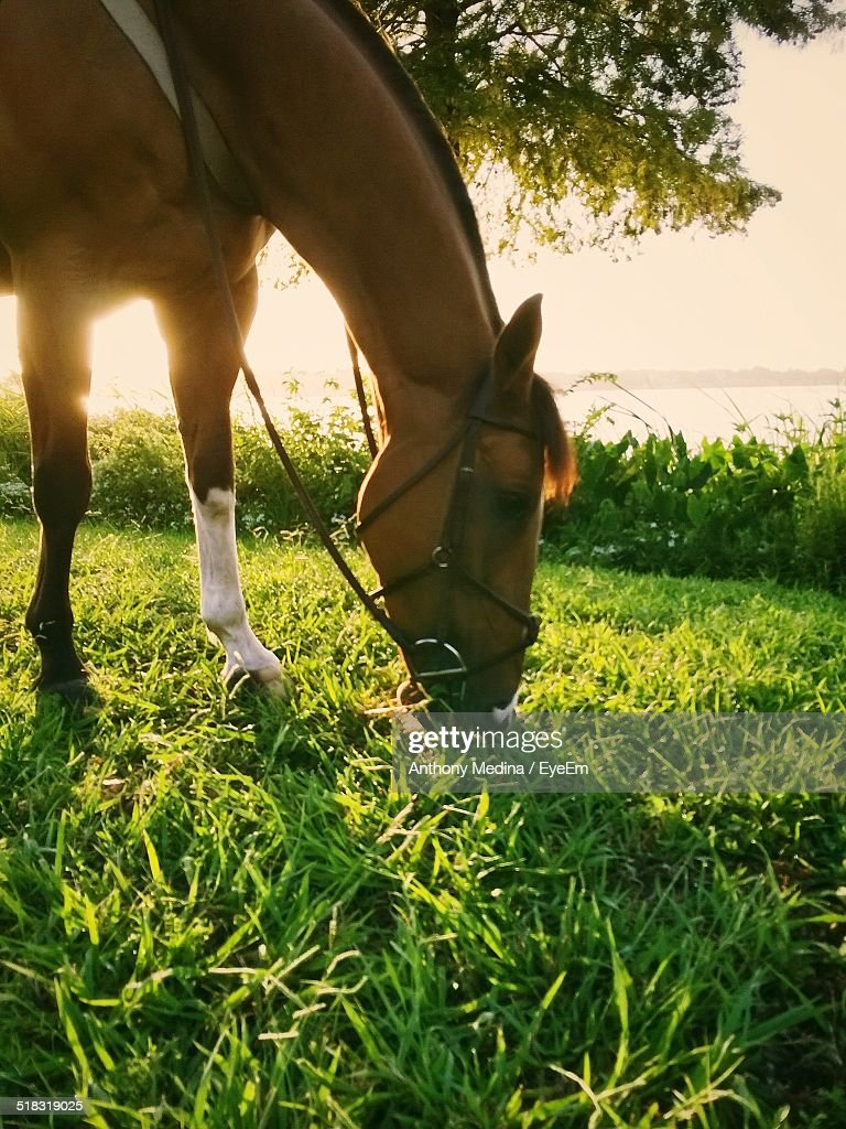 Close-up Side View Of A Horse Grazing On Landscape
