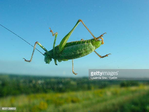 Close-Up Side View Of Grasshopper Against Clear Blue Sky