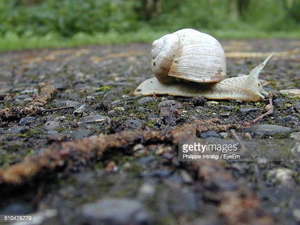 Close-up side view of snail on ground