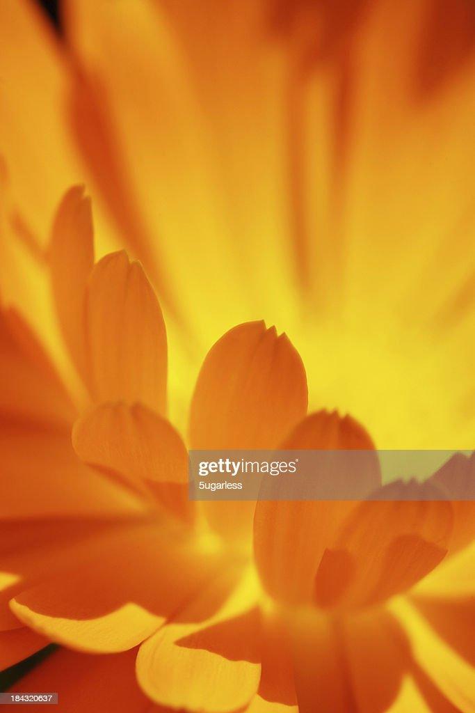 Close-up soft focus flower