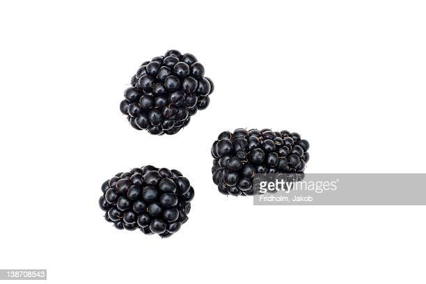 Close-up studio shot of organic blackberries