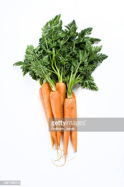 Close-up studio shot of organic carrots
