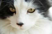 Closeup view of a cat
