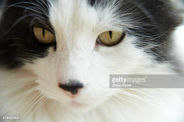 Closeup view of a cat
