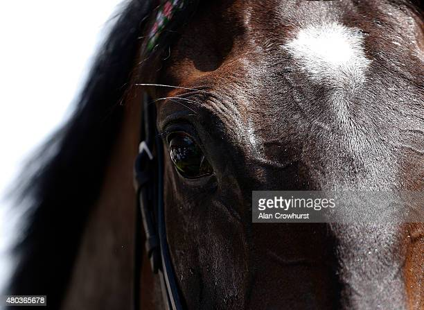 A closeup view of a horse's eye at Newmarket racecourse on July 11 2015 in Newmarket England