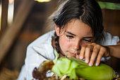 Close-up view of girl (6-7) husking corn