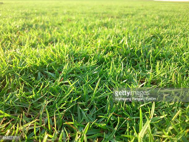 Close-Up View Of Green Grass