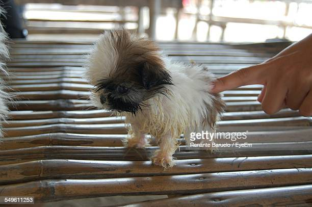 Close-Up View Of Person Poling Puppy