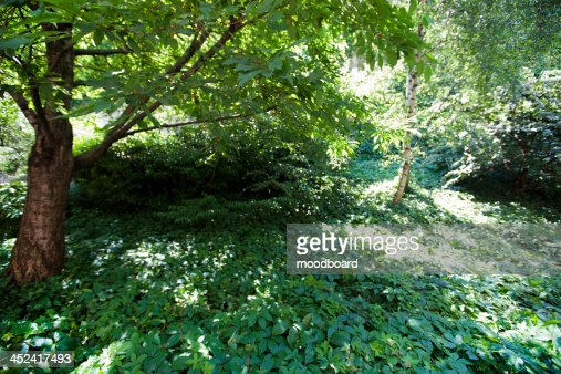 Close-up view of woodland : Foto de stock
