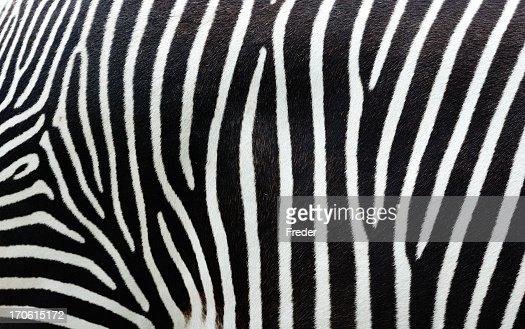 Close-up view of zebra stripes