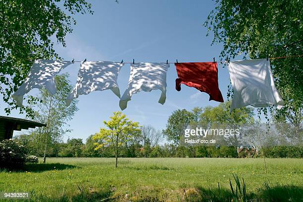 Clothesline with t-shirts blowing in wind between trees