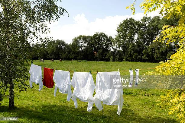 Clothesline with white and red shirts between trees (XXL)