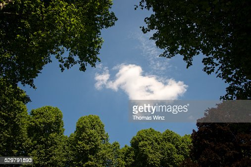 Cloud and trees