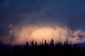 Cloud over silhouetted forest