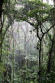 Cloudforest in Monteverde, Costa Rica.