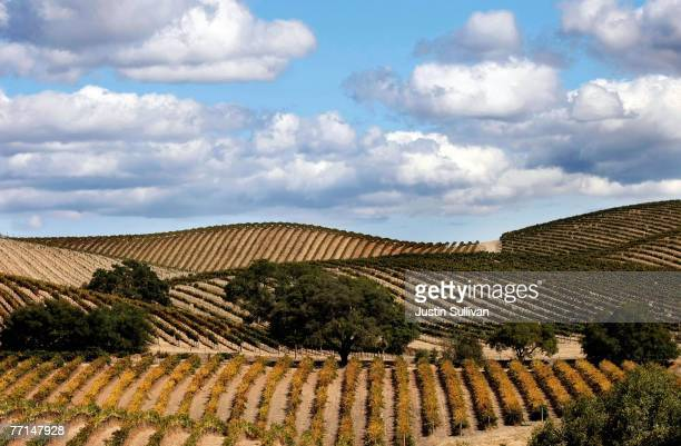 Clouds move in the sky above Artesa Winery in Carneros Valley October 1 2007 in Napa California Wineries in the Napa Valley are in the midst of...
