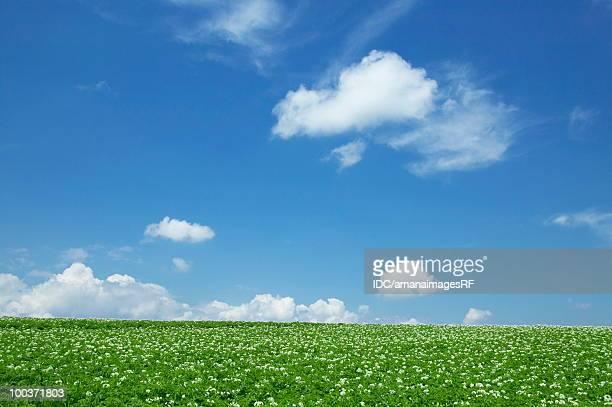 Clouds over potato field, Biei town, Hokkaido prefecture, Japan