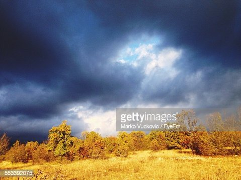 Clouds Over Woodland