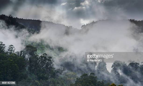 Clouds passing the tree in Ooty