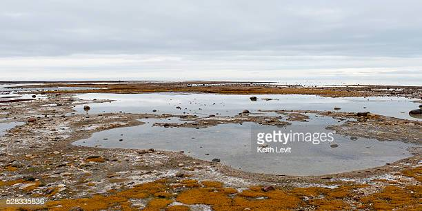 Clouds reflected in shallow pools of water and a flat landscape; churchill manitoba canada