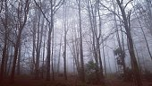 Cloudy woodland Forest trees