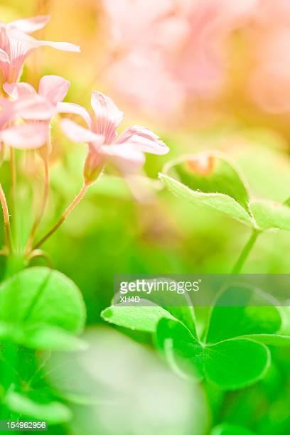 Klee und Blumen im Frühling