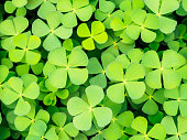 Green clover leave background and pattern