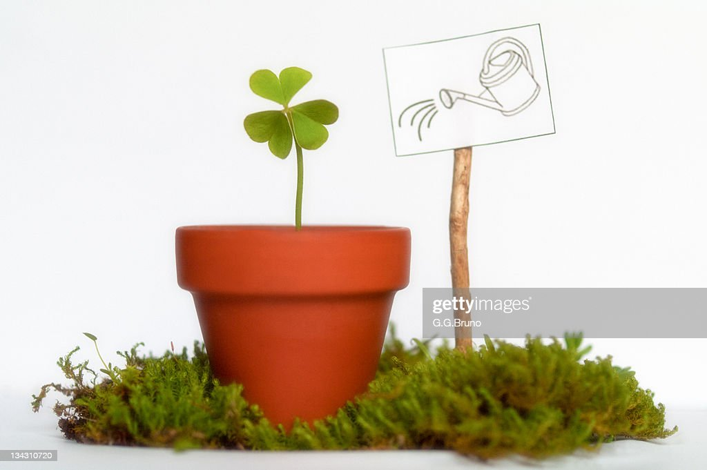 Clovers growing into small clay pot stock photo getty images for Small clay pots