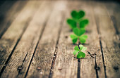 Clovers in a row on wood