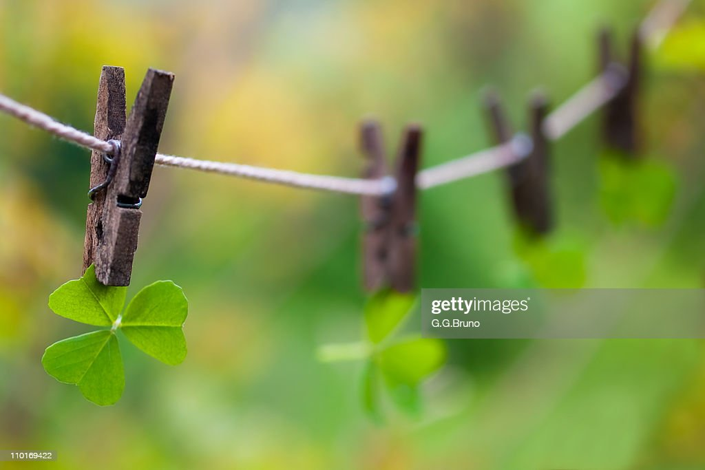 Clovers on clothesline