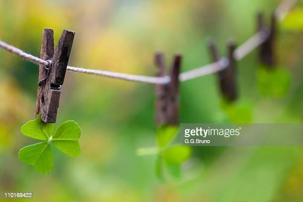 Clovers on clothesline