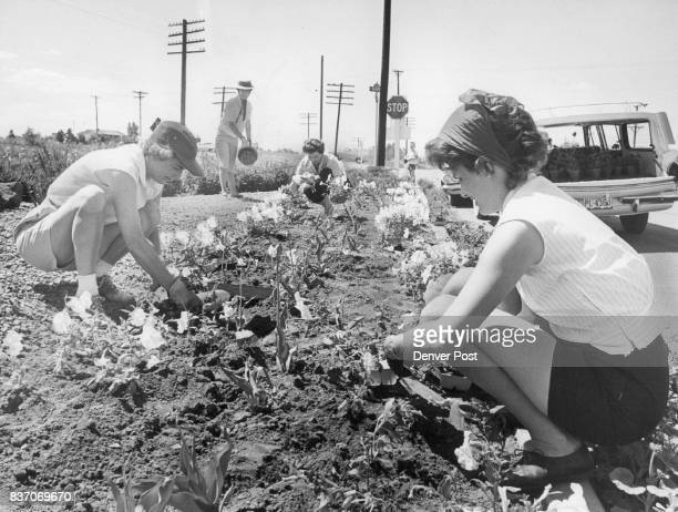 Club Decorates Tourist Stop Members of the Sunburn and Blisters Garden Club of Littleton plant geraniums and ***** to beautify the hospitality...