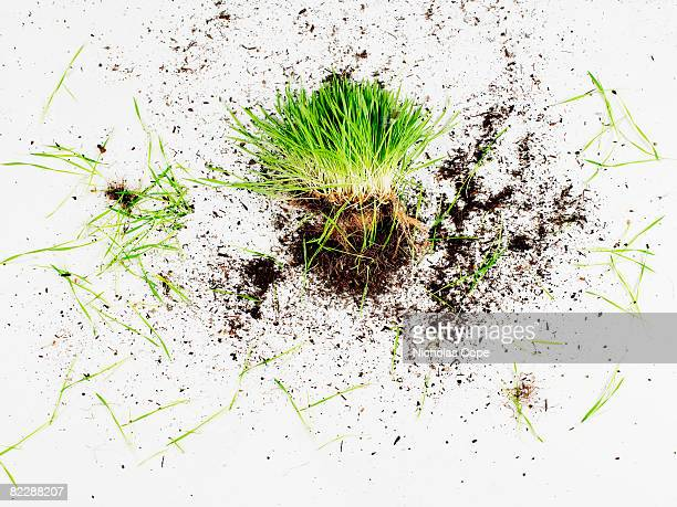 Clump of grass and dirt on pure white ground