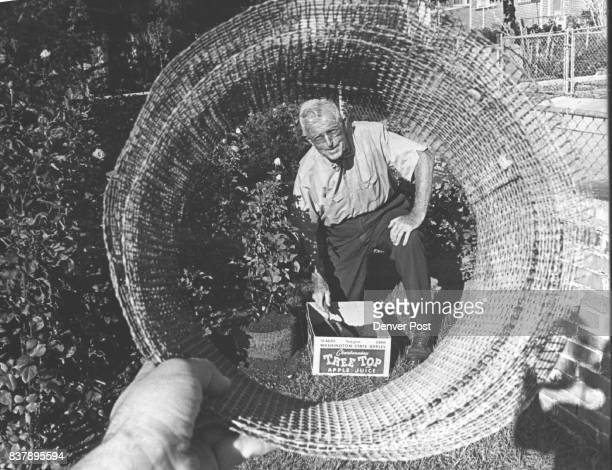 Clyde Learned demonstrates his method of preparing roses for winter by mounding them with dirt held in place with a collar of hardwaremesh screening...