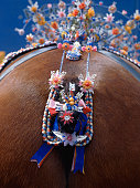 A clydesdale horse decked in colorful tack as part of a competition at the 1980 Royal Highland horse show
