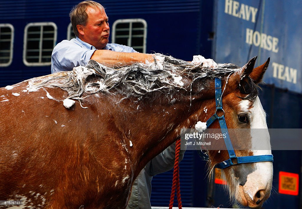 A Clydesdale Horse is prepared to be shown, at the Royal Highland Show June 19, 2008 in Edinburgh, Scotland. The event is the biggest in the Scottish farming calendar with it expecting over 100,000 visitors over the next four days.