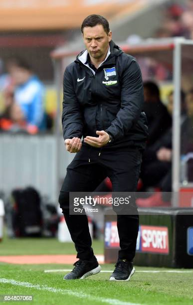 coach Pal Dardai of Hertha BSC during the game between dem 1 FC Koeln and Hertha BSC on march 18 2017 in Koeln Germany