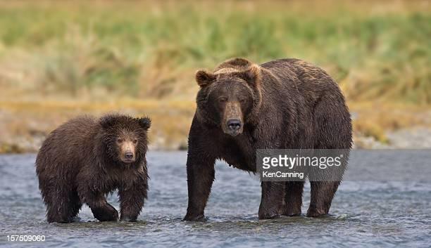 Coastal ours brun mère et son ourson
