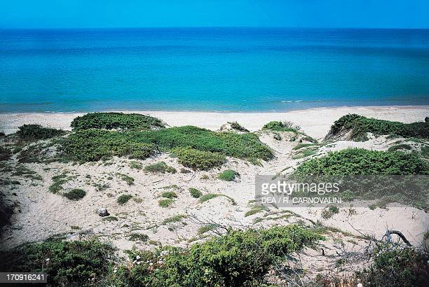 Coastal dunes in the Pantani dell' Inferno State Nature Reserve Circeo National Park Lazio Italy
