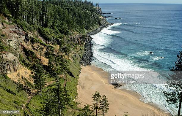 Coastal erosion and deposition Wave pattern Norfolk Island pines on cliffs Anson Bay Norfolk Island Australia
